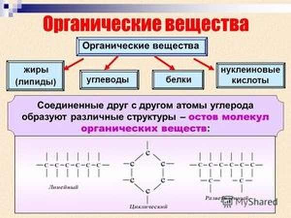 Что входит в состав клетки