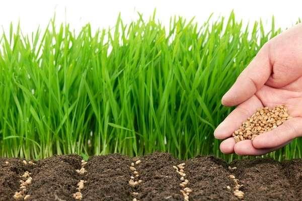 Что такое почва состав, типы и их характеристика