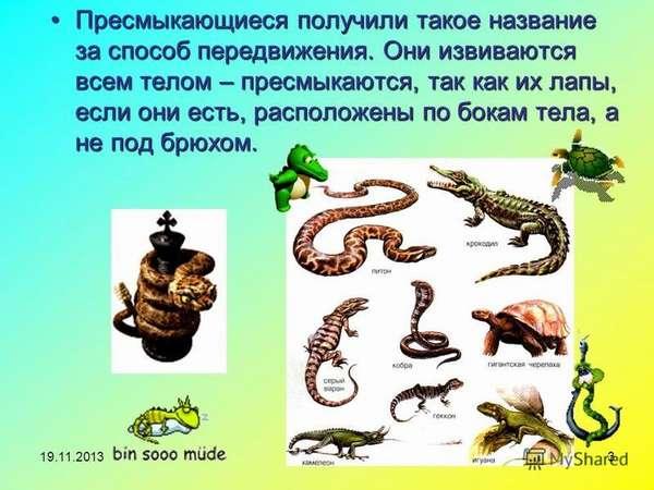 Особенности животных пресмыкающихся