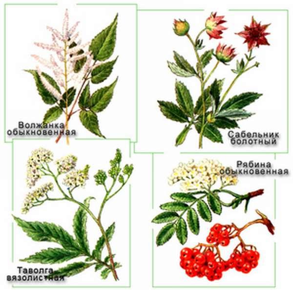 Какие вредители вредят растениям