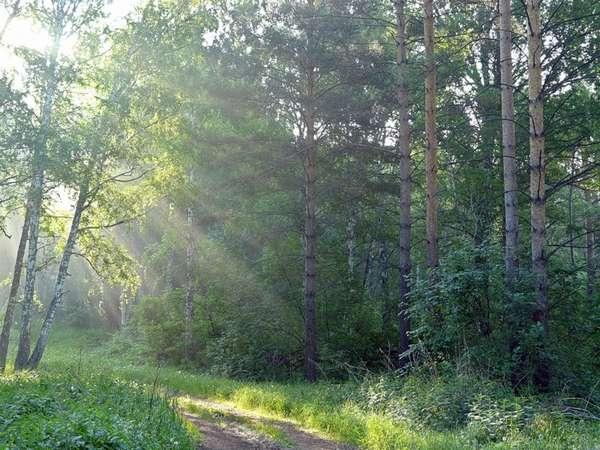 Смешанные леса: характеристика и особенности природной зоны ...