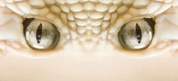 Фонетический разбор «глазки»