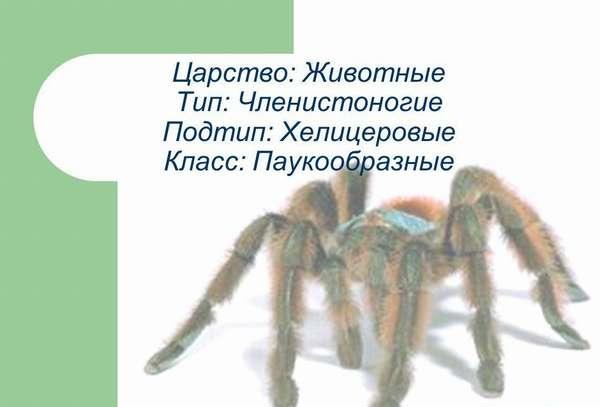 Презентация на тему: Царство: Животные Тип: Членистоногие Подтип ...