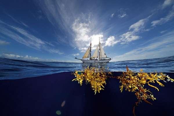 Саргассово море (+Фото)