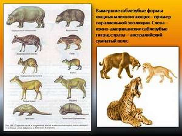 Типы эволюционных изменений