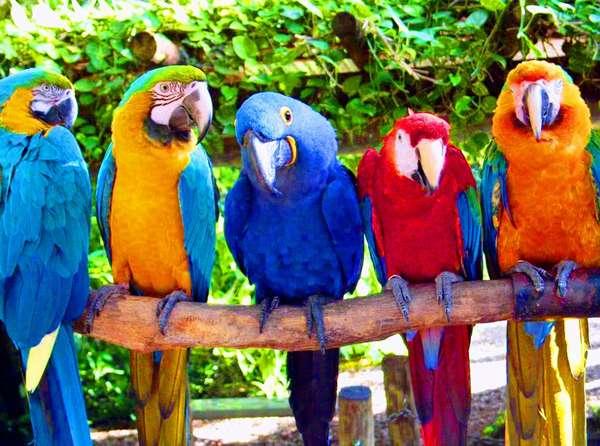 Попугаи любят лето Центр Современной Ветеринарной Медицины