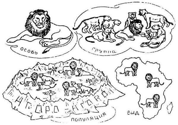 Генофонд популяции