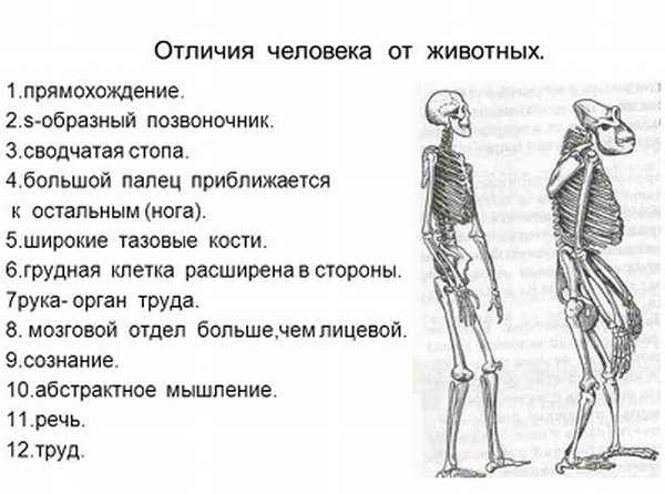 Отличия человека от животного