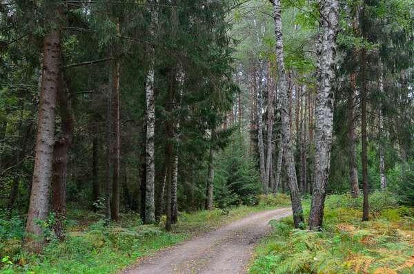 Смешанный лес :: Miola – Социальная сеть ФотоКто