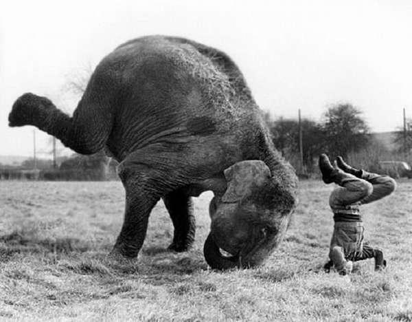 Фото животных, которым очень нравится заниматься йогой ))