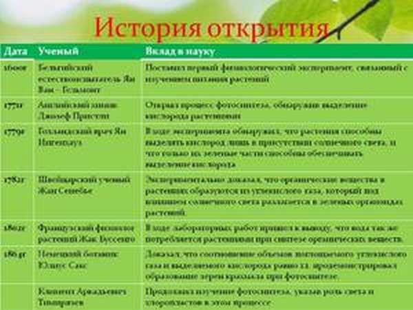 Что известно о фотосинтезе