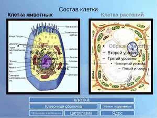 Описание клетки животных и растений