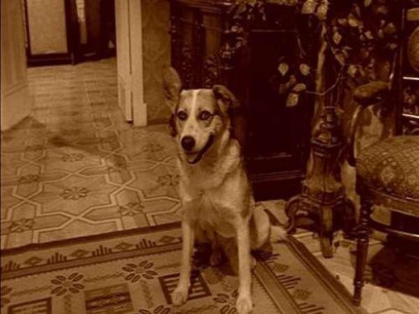 образ собаки из повести