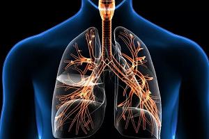 Дыхательная система человека строение и функции, нижние и верхние дыхательные пути, значение мехнизма дыхания, отделы, особенности анатомии и физиологии органов дыхания