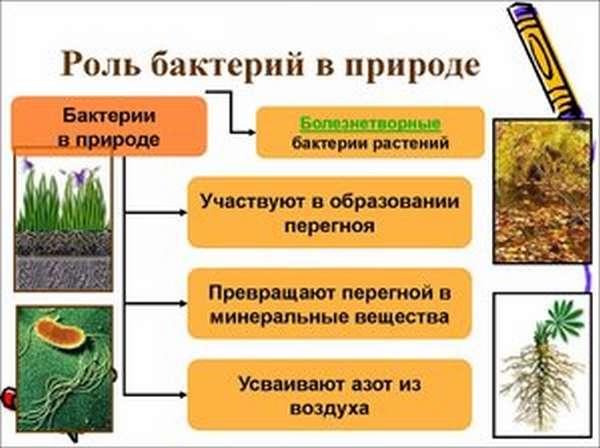Бактерии в природе