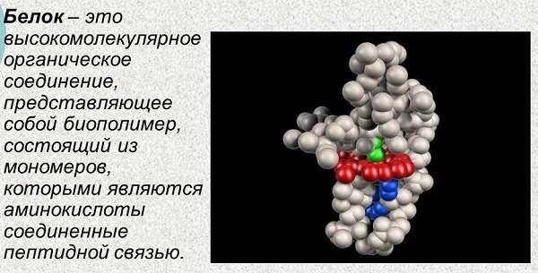 Что такое белки строение и функции