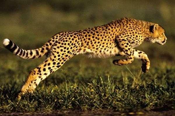 Хордовые животные общая характеристика типа и примеры животных