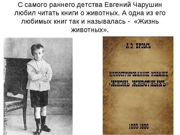 Чарушин Е.И. биография художника иллюстратора и детского писателя