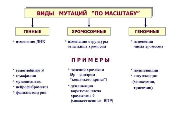 Виды мутаций