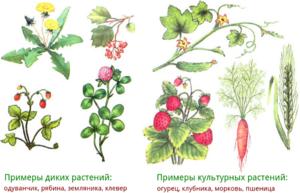 Какие растения требуют посадки
