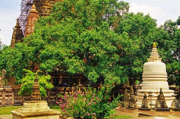 дерево у монастыря