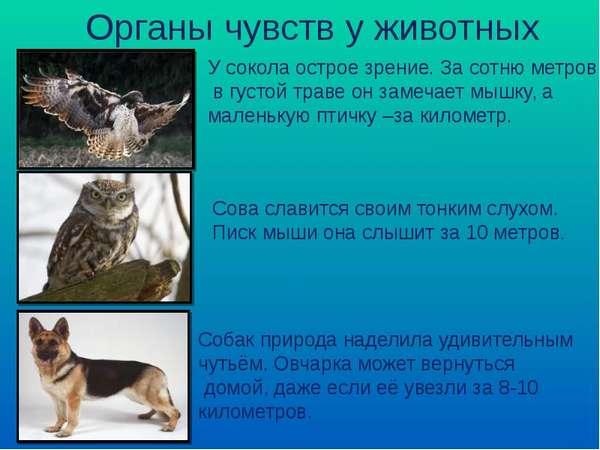 органы чувств животных