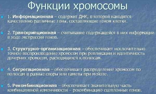 Хромосома количество, строение, функции, типы
