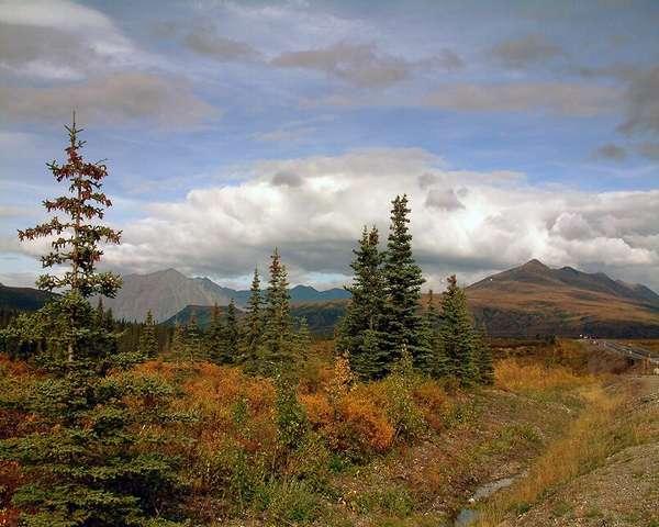 Характеристика зоны лесотундра: географическое положение и климат ...