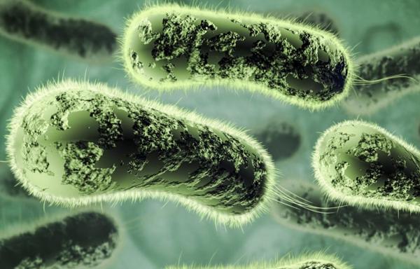 Царство бактерии общая характеристика