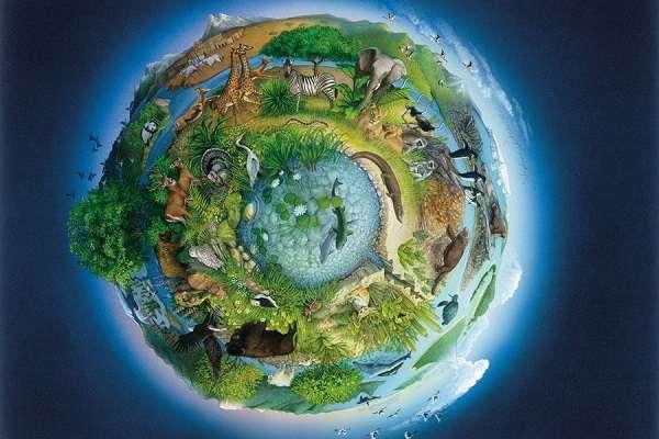 Живая и неживая природа определение, отличие, признаки, примеры явлений и предметов
