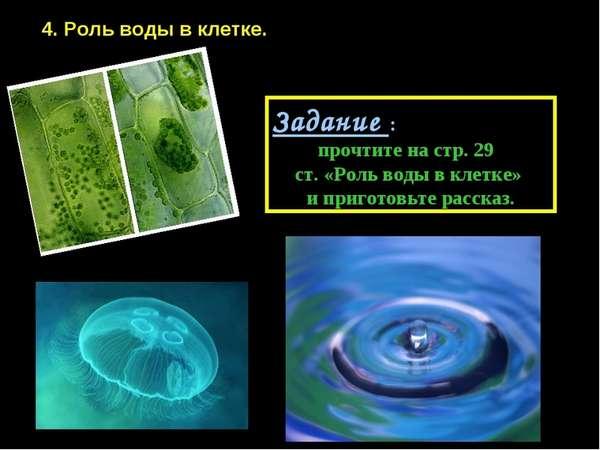 Немаловажная роль воды в клетке