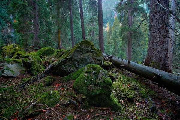 субтропические леса россии